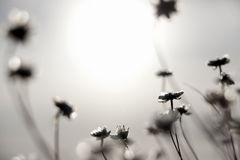Kwiaty i Sun Obraz Royalty Free