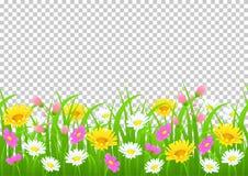 Kwiaty i trawa graniczą, żółty i biały chamomile i delikatna różowa łąki trawa na przejrzystym i zielonej ilustracji