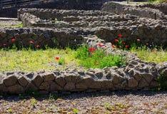 Kwiaty i Włochy Zdjęcia Royalty Free