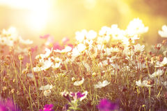 kwiaty i światło słoneczne, Fotografia Stock