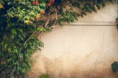 Kwiaty i zielona roślina na starej ścianie Fotografia Royalty Free