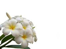 kwiaty ii Zdjęcia Royalty Free