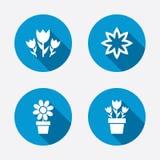 kwiaty ikony Bukiet róża symbol Fotografia Royalty Free