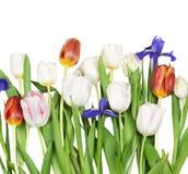 kwiaty iris tulipany Zdjęcia Royalty Free