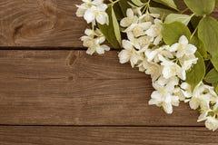 Kwiaty jaśmin na drewnianym tle obrazy royalty free