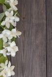 Kwiaty jaśmin na drewnianym tle zdjęcie stock