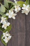 Kwiaty jaśmin na drewnianym tle obraz royalty free