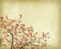 Kwiaty Jedwabniczy Floss drzewo, Chorisia Speciosa Obrazy Stock