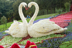 kwiaty Kiev festiwal Obrazy Royalty Free
