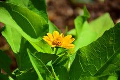 Kwiaty, kolor żółty Fotografia Royalty Free