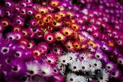 kwiaty kolorowa tła wiosny Zdjęcia Royalty Free