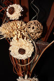 Kwiaty & kształty Fotografia Royalty Free