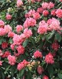 Kwiaty który cieszyć się możesz ty Obrazy Royalty Free