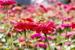 Kwiaty - kwiat na pszczole obraz royalty free
