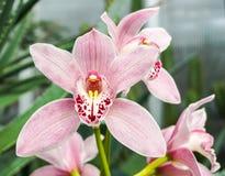 Kwiaty, kwiat, orchidea Fotografia Royalty Free