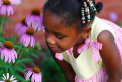 kwiaty kwiaty Obrazy Royalty Free