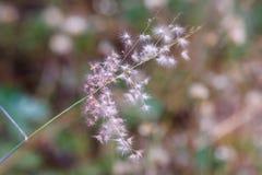 Kwiaty kwitną w ogródzie z obiektyw zamazującym skutkiem jako przedpole i tło zdjęcie royalty free