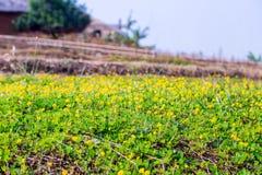 Kwiaty kwitną w ogródzie z obiektyw zamazującym skutkiem jako przedpole i tło obrazy stock
