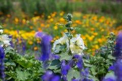 Kwiaty kwitną w ogródzie z obiektyw zamazującym skutkiem jako przedpole i tło obrazy royalty free