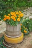 Kwiaty kwitnęli, zasadzali w starej drewnianej baryłce, Zdjęcia Royalty Free