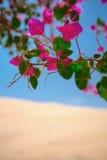 Kwiaty kwitnęli w oazie w pustyni Fotografia Stock