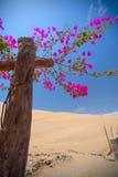 Kwiaty kwitnęli w oazie w pustyni Zdjęcie Royalty Free