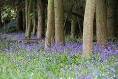 kwiaty lasu łóżko zielonych roślin źródła światła słonecznego drzew bagażnika drzewny zdjęcia royalty free