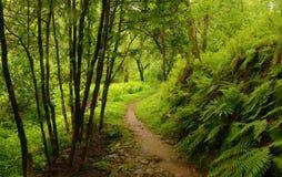 kwiaty lasu łóżko zielonych roślin źródła światła słonecznego drzew bagażnika drzewny zdjęcie stock