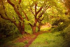 kwiaty lasu łóżko zielonych roślin źródła światła słonecznego drzew bagażnika drzewny fotografia stock