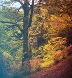 kwiaty lasu łóżko zielonych roślin źródła światła słonecznego drzew bagażnika drzewny fotografia royalty free