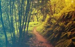 kwiaty lasu łóżko zielonych roślin źródła światła słonecznego drzew bagażnika drzewny Filtrujący wizerunek: ciepły krzyż przetwar Fotografia Stock