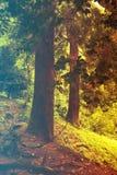 kwiaty lasu łóżko zielonych roślin źródła światła słonecznego drzew bagażnika drzewny Filtrujący wizerunek: ciepły krzyż przetwar Obraz Royalty Free