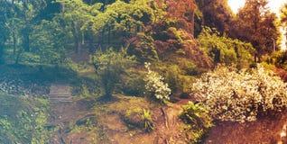 kwiaty lasu łóżko zielonych roślin źródła światła słonecznego drzew bagażnika drzewny Filtrujący wizerunek: ciepły krzyż przetwar fotografia royalty free