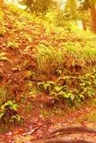 kwiaty lasu łóżko zielonych roślin źródła światła słonecznego drzew bagażnika drzewny Filtrujący wizerunek: ciepły krzyż przetwar Zdjęcie Royalty Free