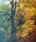 kwiaty lasu łóżko zielonych roślin źródła światła słonecznego drzew bagażnika drzewny Filtrujący wizerunek: ciepły krzyż przetwar Zdjęcie Stock