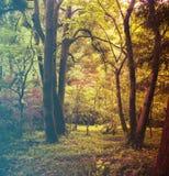 kwiaty lasu łóżko zielonych roślin źródła światła słonecznego drzew bagażnika drzewny Filtrujący wizerunek: ciepły krzyż przetwar Zdjęcia Royalty Free