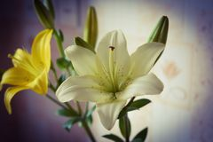 kwiaty, leluja Obraz Royalty Free