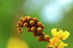 Kwiaty, liście, rośliny, natura, makro- Obraz Stock