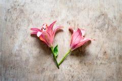 kwiaty lilly Obrazy Royalty Free