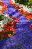 kwiaty lubią rzekę Obrazy Stock