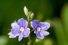 kwiaty makro Zdjęcia Stock
