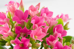 kwiaty makro wiosny Zdjęcia Royalty Free
