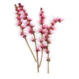 Kwiaty Miedziany stek Fotografia Stock