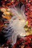 Kwiaty morze fotografia stock