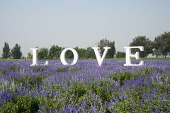 Kwiaty morze, miłość, Angielska chrzcielnica Obrazy Royalty Free