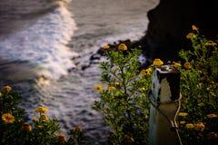 Kwiaty morzem Fotografia Stock