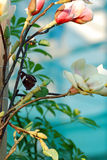 kwiaty motyla zdjęcie stock