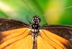 kwiaty motyliego makro pomarańczowy posiedzenia Obrazy Royalty Free