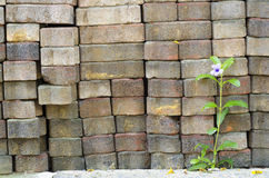 Kwiaty na Ściana Z Cegieł Fotografia Royalty Free