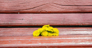 Kwiaty na ławce Obraz Stock